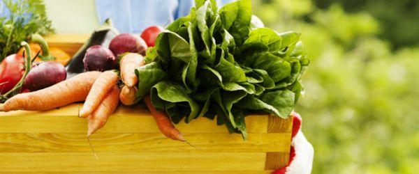 Cuáles son los alimentos orgánicos, depurativos, regenerativos
